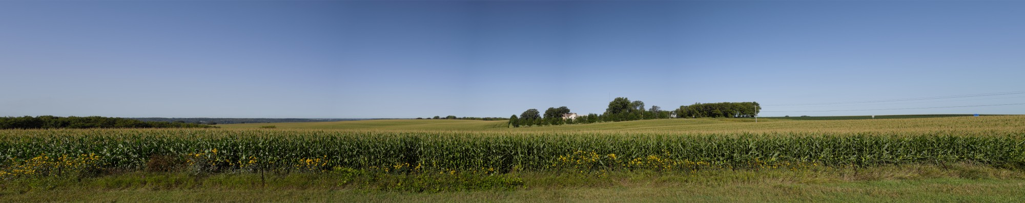 Corn field, translite, Richard Lund, Minnesota,