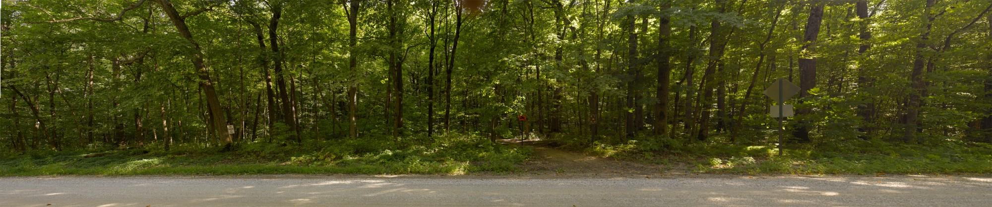 Translite summer trees, Richard Lund, summer, Minnesota