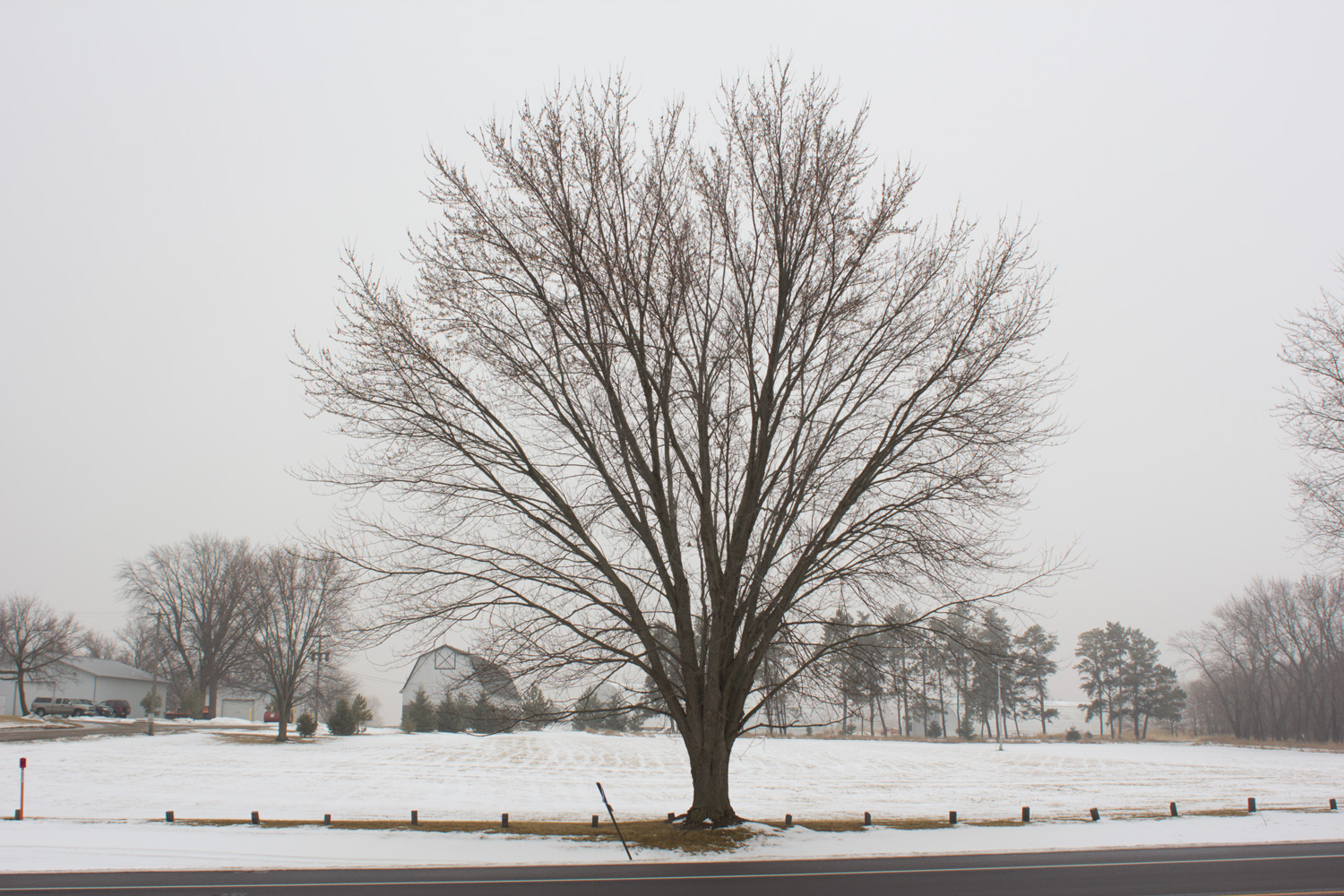 Hwy 301, Winter snow in St. Cloud, Bare tree in winter, Bare tree in Minnesota, Richard Lund